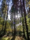 Wandern und QiGong @ Bildungszentrum | Schwarzenberg am Böhmerwald | Oberösterreich | Österreich